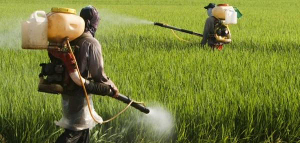 an appeals court says ca can list the herbicide glyphosate as a